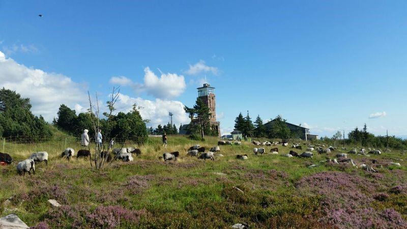 Im Sommer bieten sich Wanderungen auf der Grinde besonders wegen der einmaligen Panoramen an.