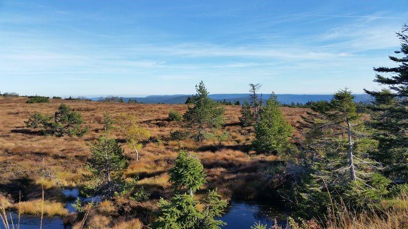 Der Gipfelrücken der Hornisgrinde ist eine baumlose Feuchtheide auf der Hochfläche.