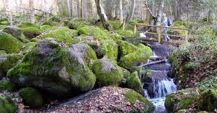 Die  letzten Meter werden wir romantisch-wild von moosbewachsene Felsen und Holzbrücken herab bis fast zu unserem Hotel geleitet.