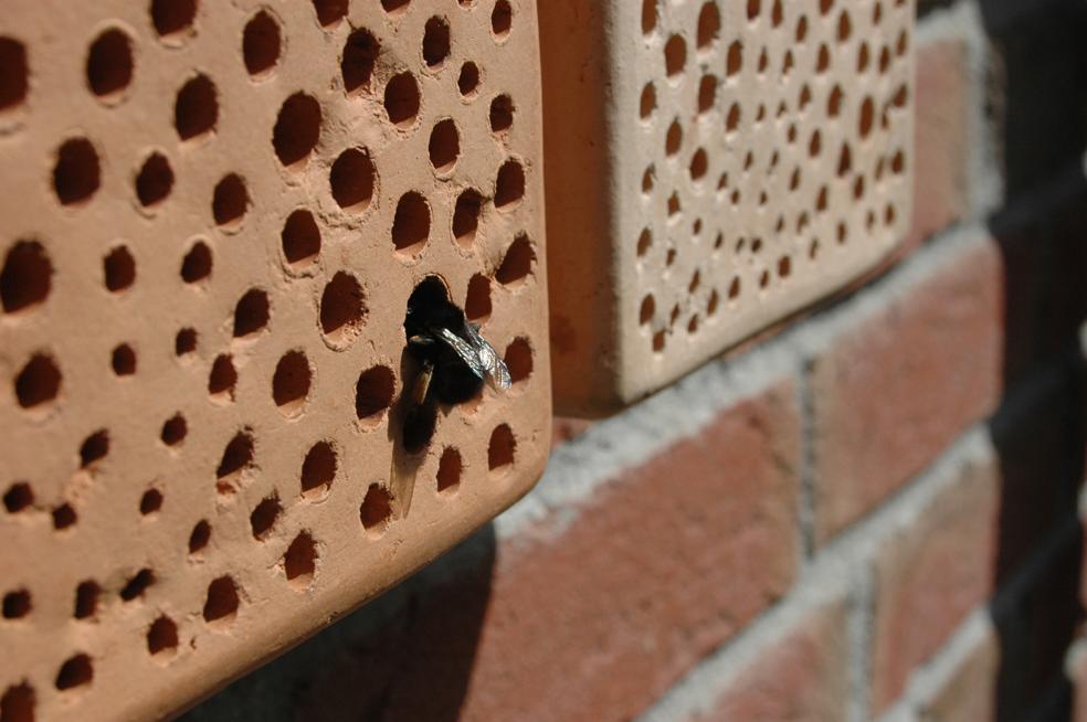 Mauerbiene auf Bienenstein. Foto: Britta Raabe