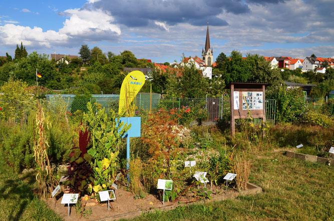 Naturgarten des Gartenfreunde Berggarten e.V. am Moritzberg, Foto: Goy