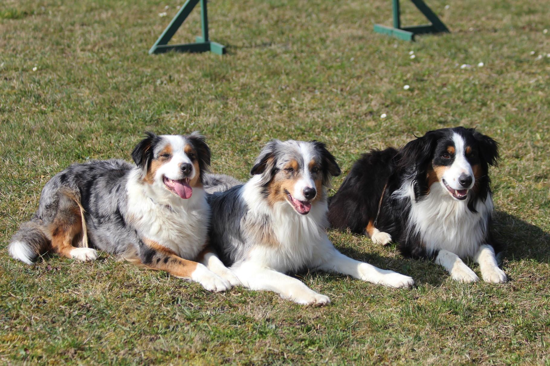 Sally, Ayla, Finn