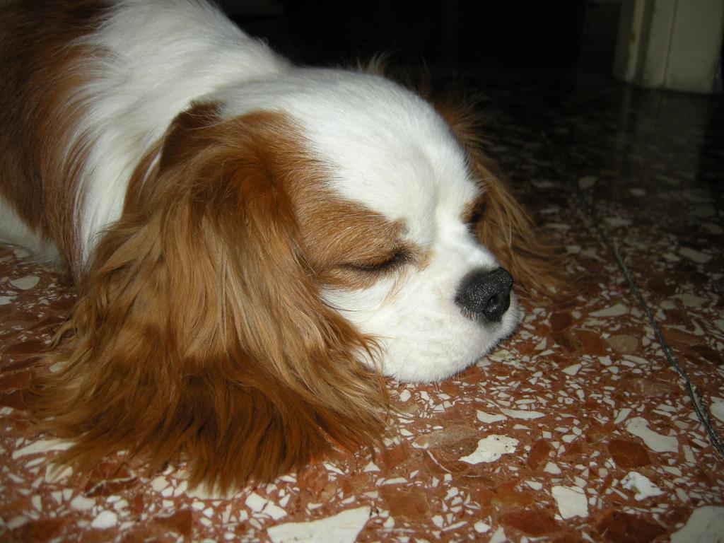 molto molto stanco!!!