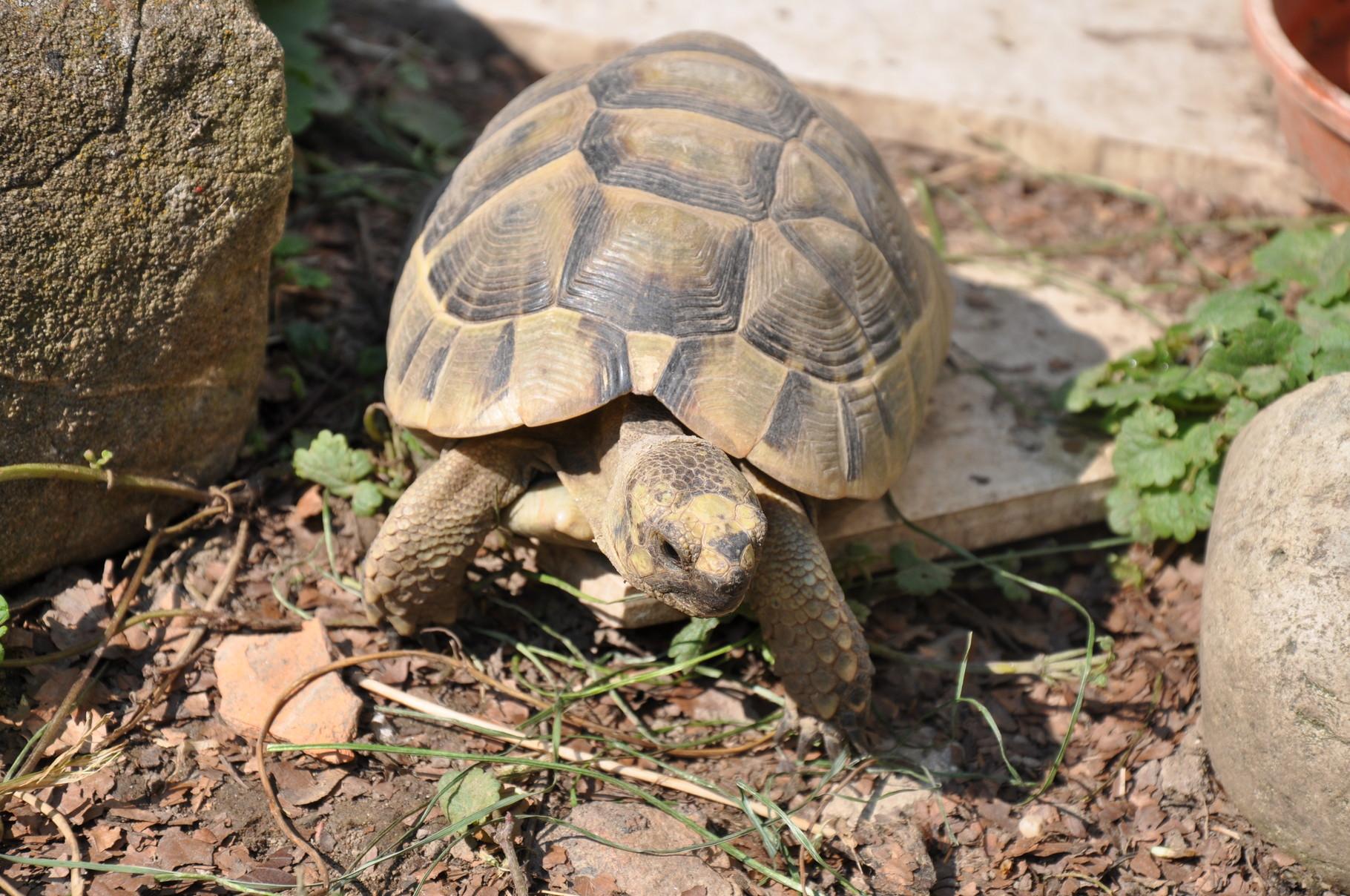 Anna die Schildkröte meiner Tochter Anna Lena