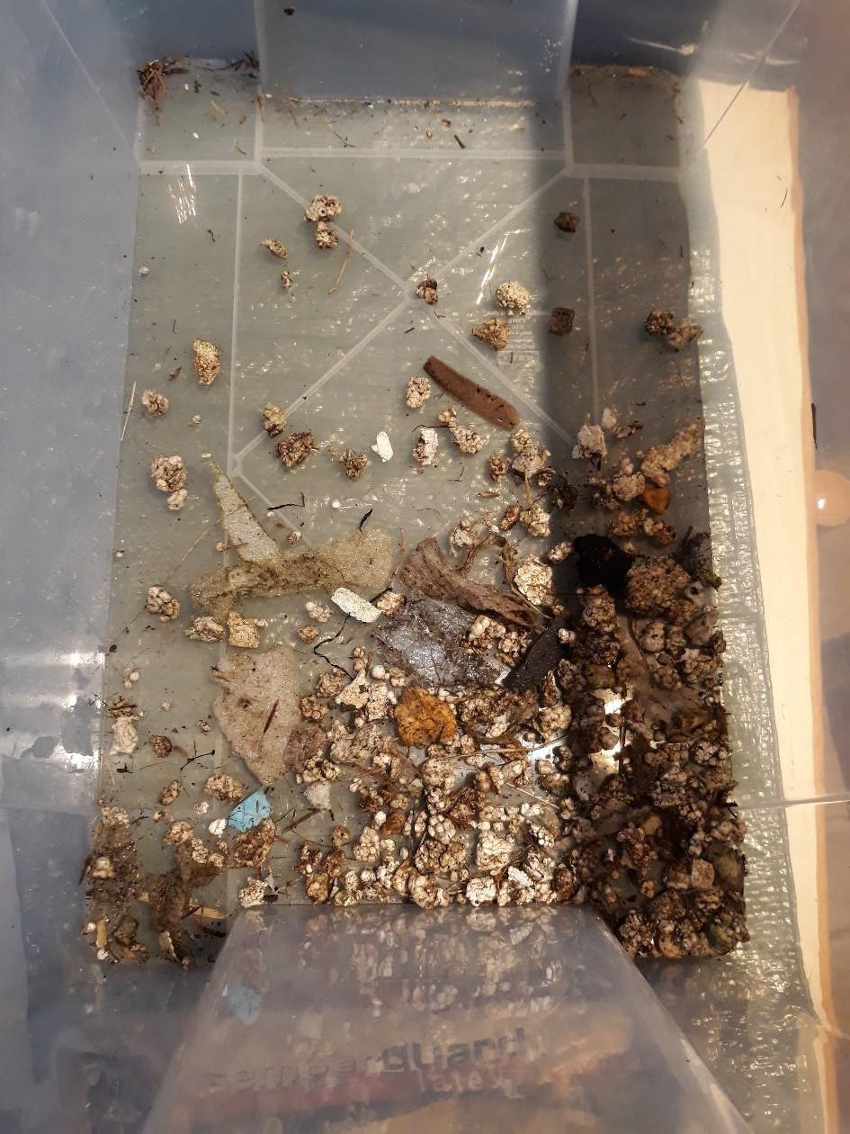 Jedes Müllteil wird kategorisiert, gezählt und protokolliert