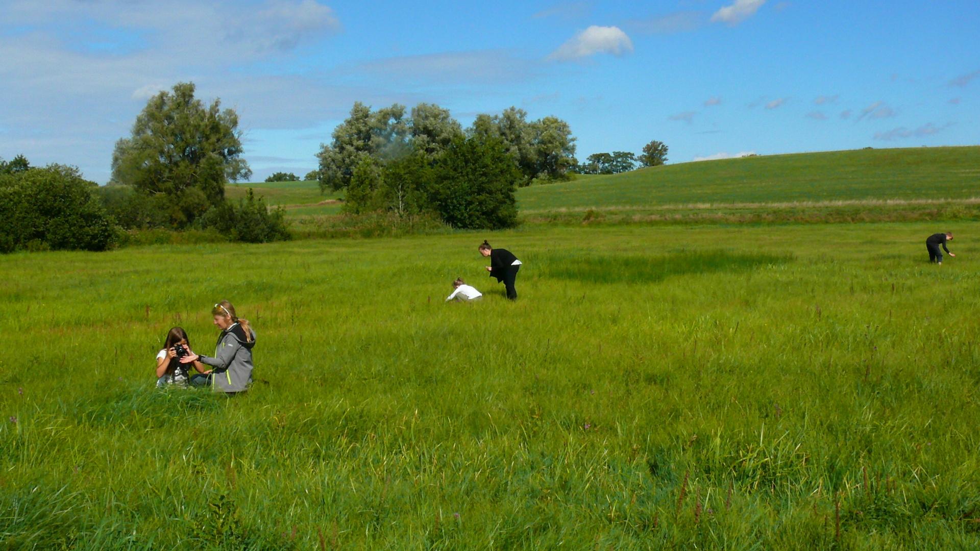 Wir suchen Grashüpfer im Recknitztal.