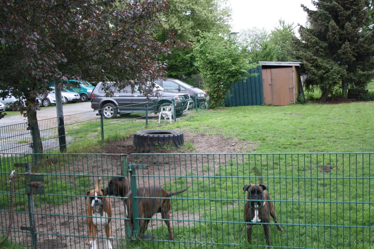 Hundespielplatz 1