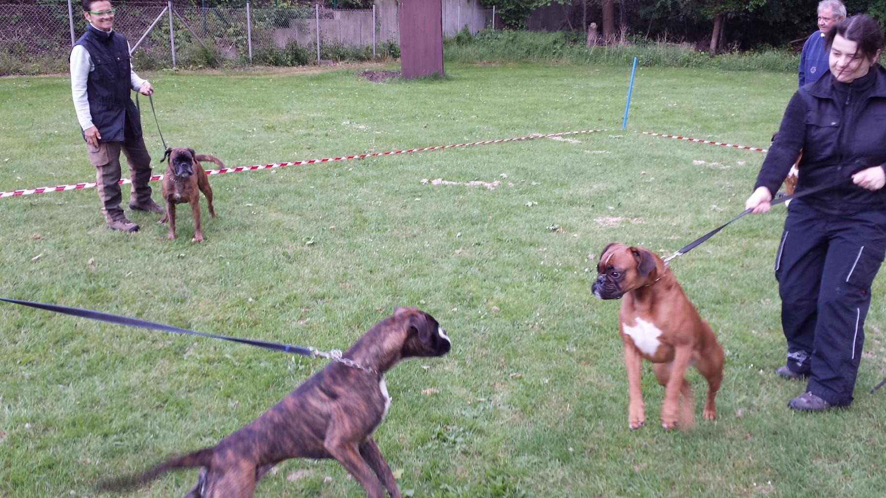 Hund zu Hund