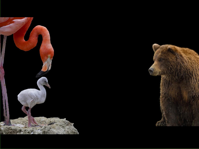 Ecouter les animaux dictionnaire des animaux diconimoz - Babouin et belette ...