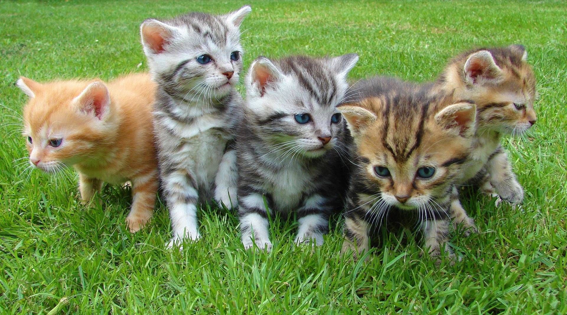 20 photos d'adorables chatons