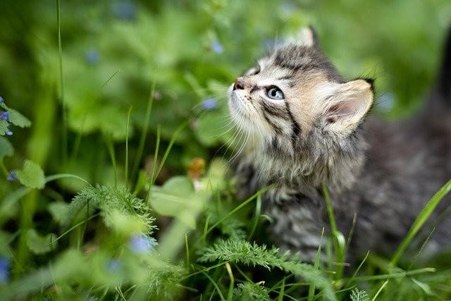 assurance chaton pourquoi souscrire