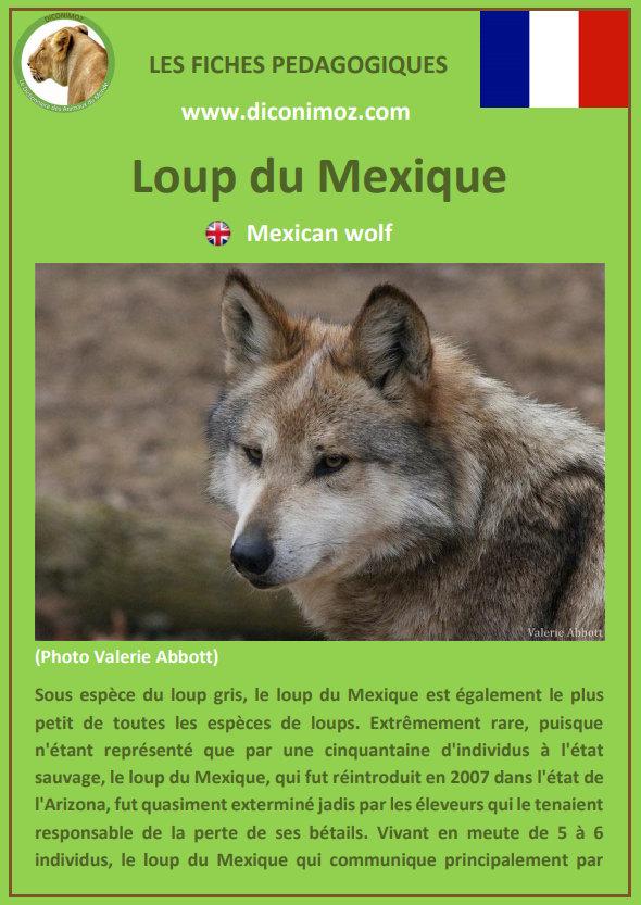 loup du mexique fiche pédagogique pdf à télécharger et a imprimer pour la maison ou pour l'école mexican wolf