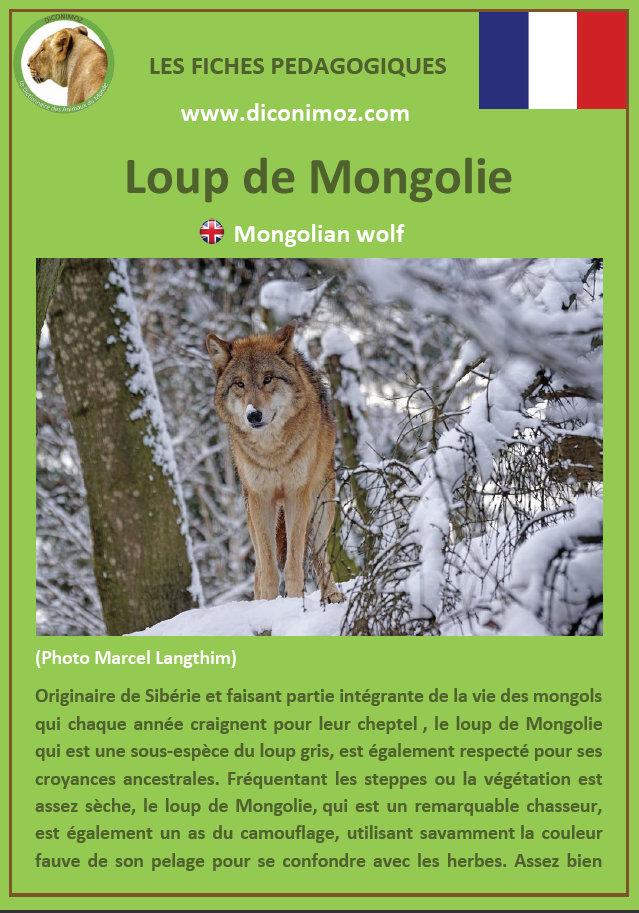 loup de mongolie fiche pédagogique pdf à télécharger et a imprimer pour la maison ou pour l'école mongolian wolf
