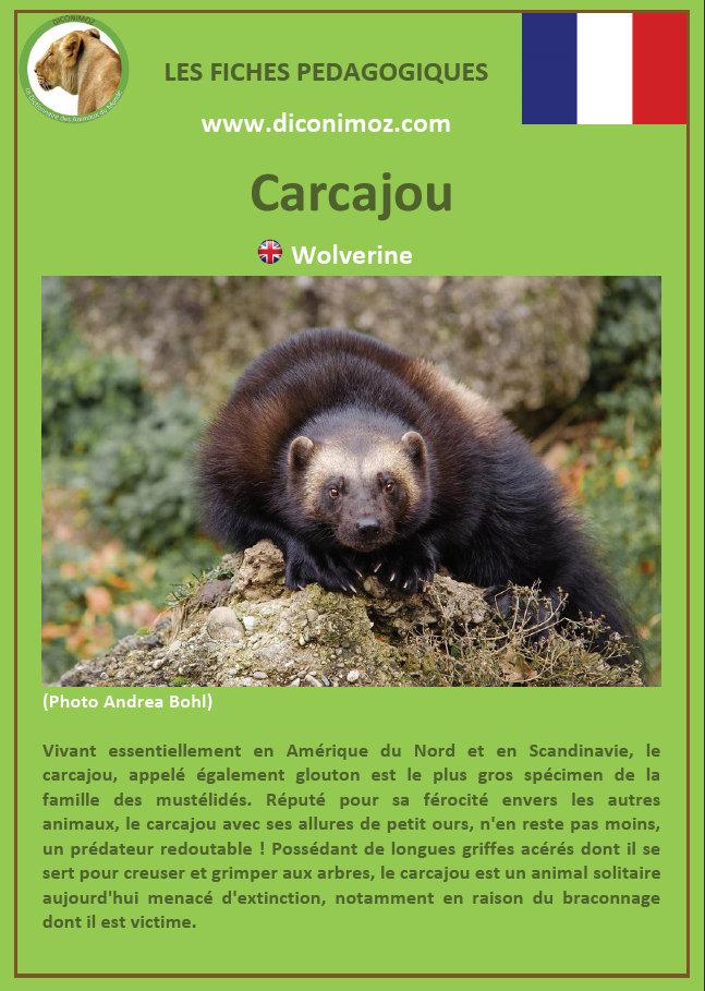 fiches animaux du canada et du quebec pdf à telecharger et a imprimer