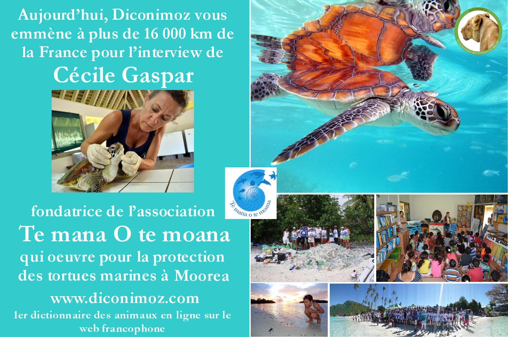 Diconimoz vous emmène en Polynésie Française, pour une toute nouvelle interview !