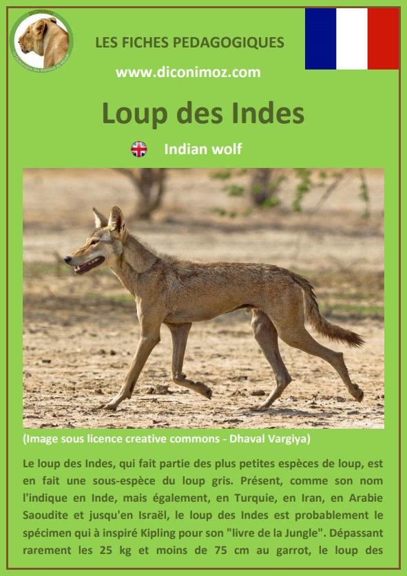 loup des indes fiche pédagogique pdf à télécharger et a imprimer pour la maison ou pour l'école indian wolf