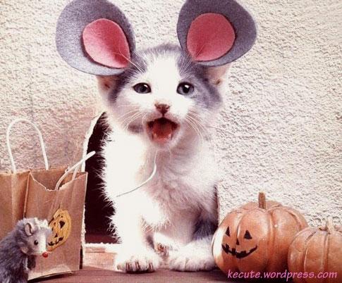 chat souris halloween deguisement