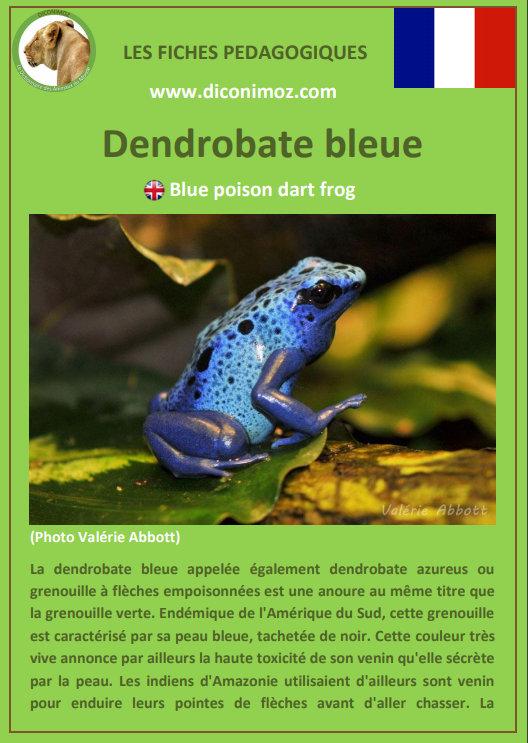 fiche animaux amazonie fiche pedagogique pdf a telecharger foret amazonienne