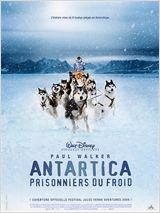 animaux film antartica