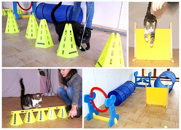 agility chat clicker parcours