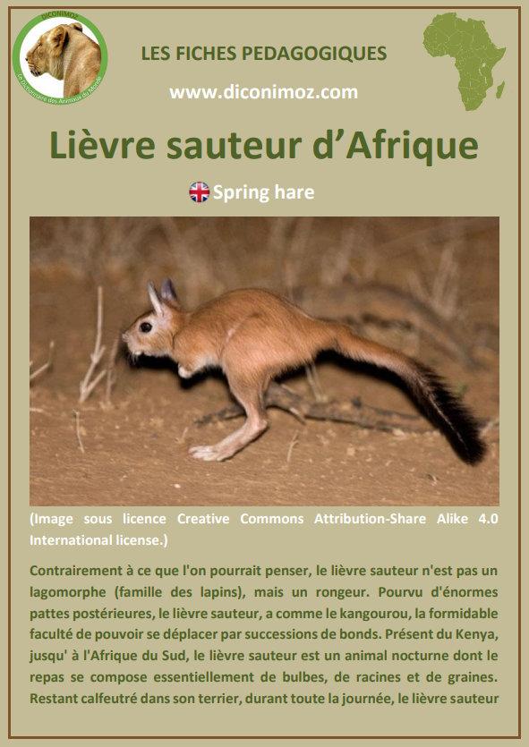 fiche animaux pdf lievre sauteur afrique du sud complement du manuel scolaire francais cm1 bordas leuk le lievre