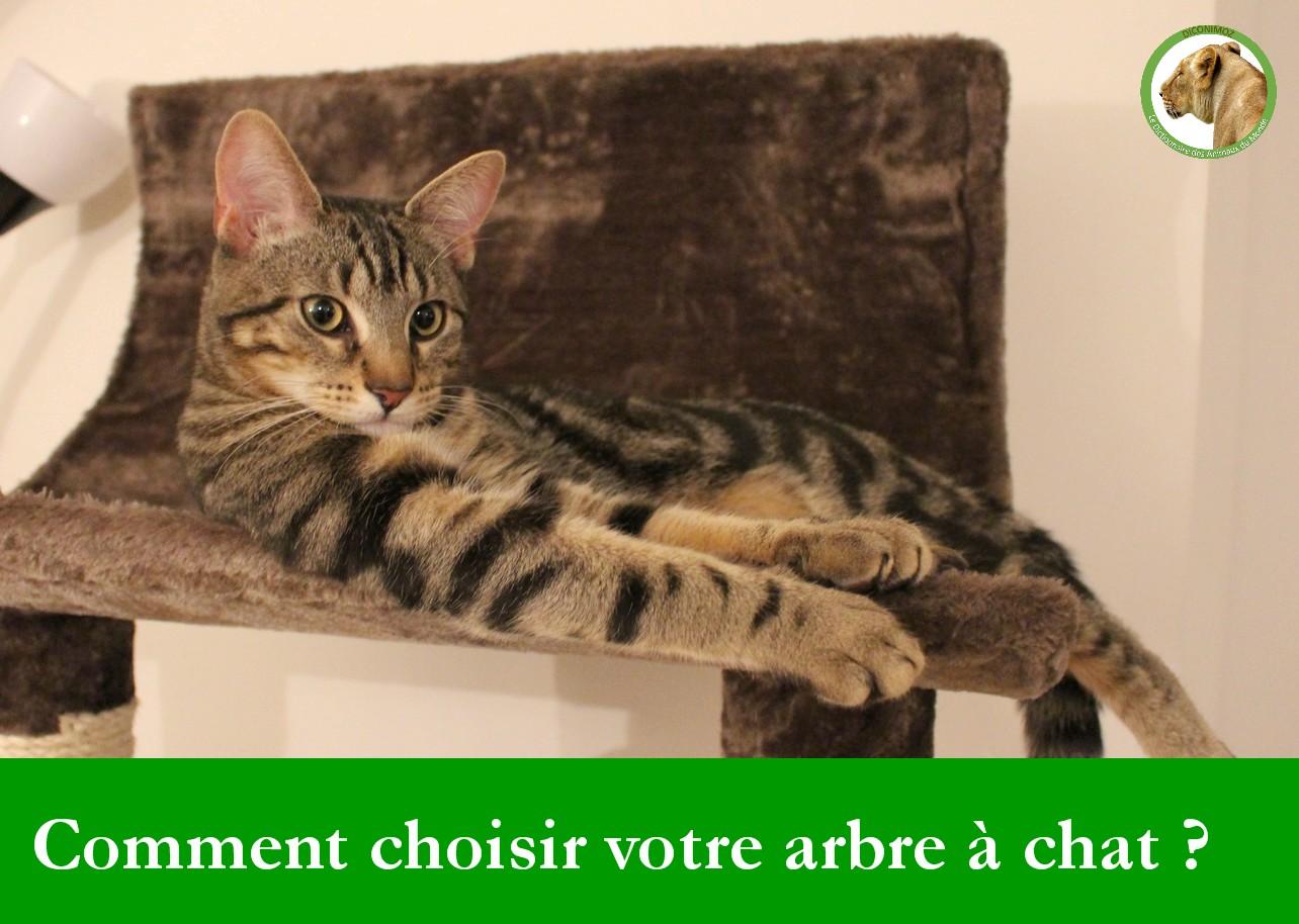 Comment choisir votre arbre à chat ?