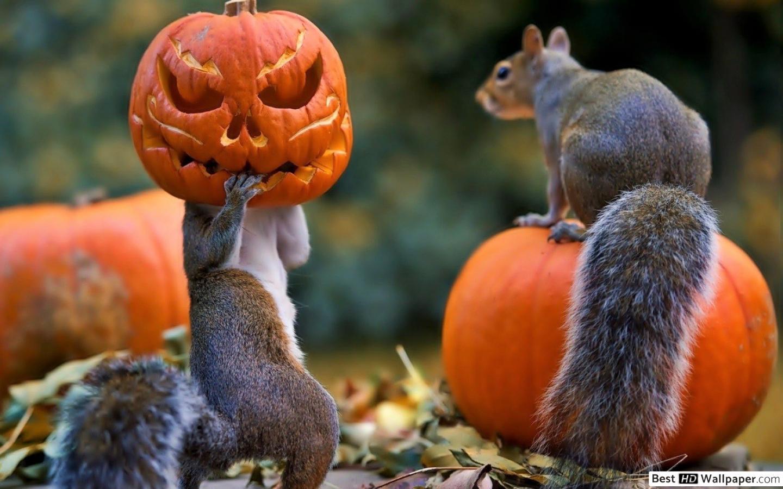Les animaux préparent halloween