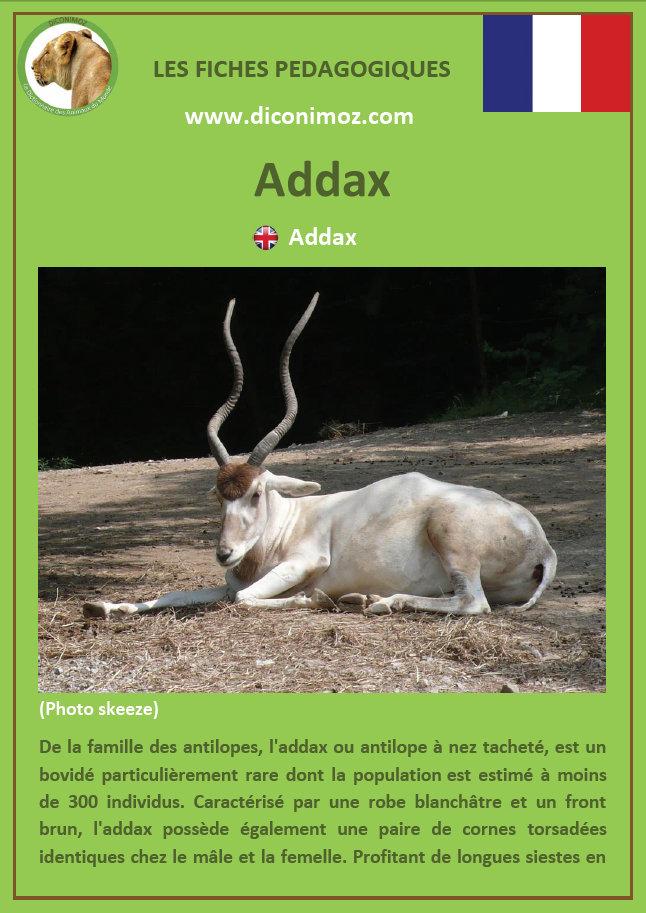 fiche animaux pedagogique pdf addax bovides afrique a telecharger et a imprimer