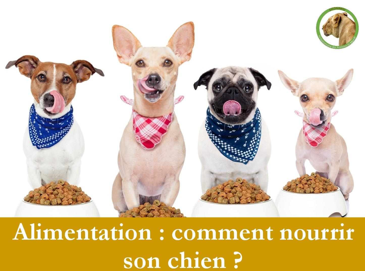 Alimentation : comment nourrir son chien ?