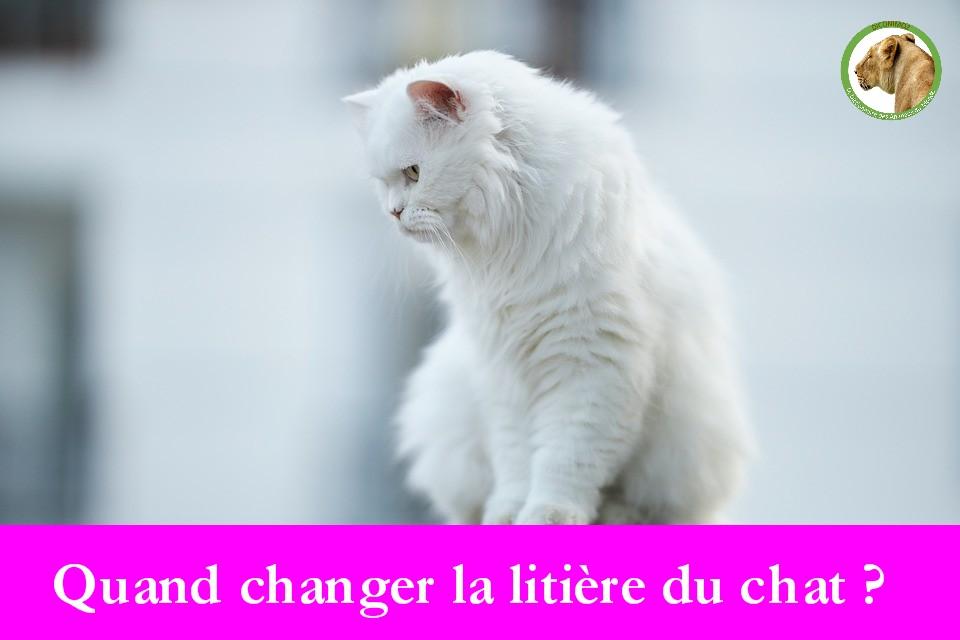 Quand changer la litière du chat ?