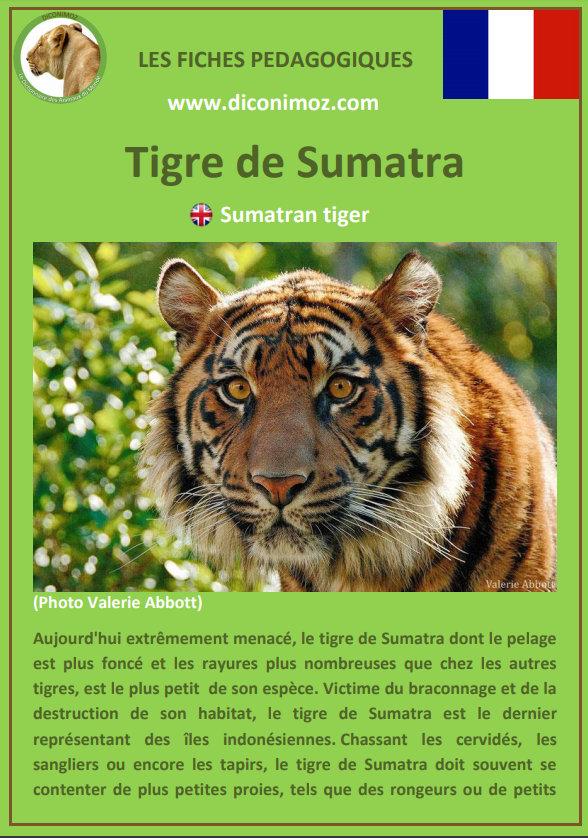 fiche animaux pdf les felins tigres lions panthere lynx jaguar guepard animal pedagogique
