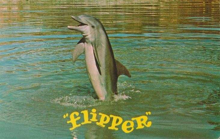 animaux célèbre flipper le dauphin