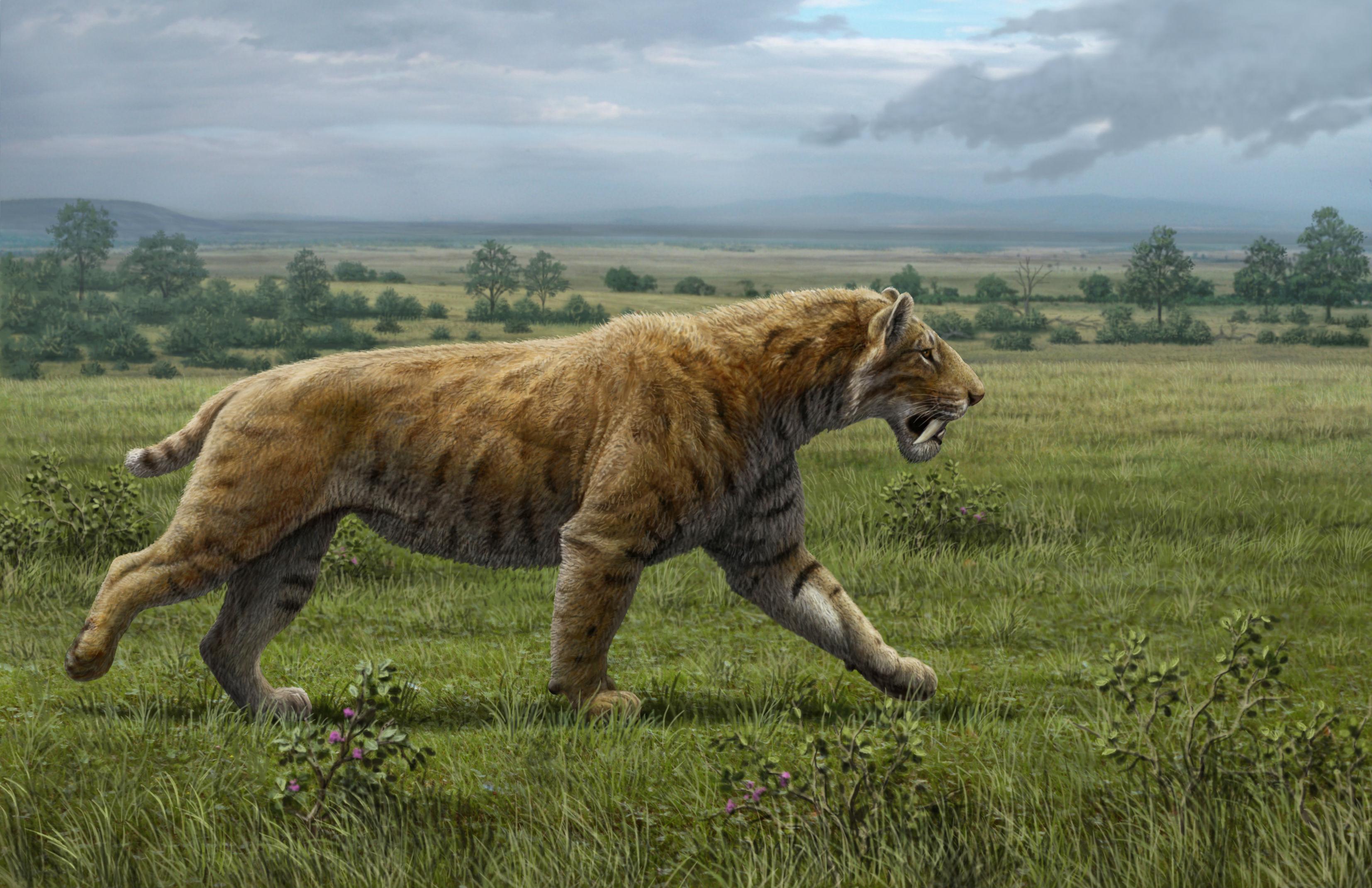 tigre tasmanie animaux disparus thylacine fiche loup australie