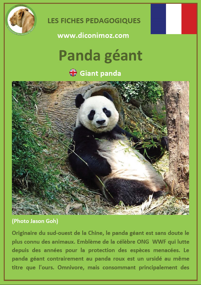 fiches animaux ours et panda pdf a telecharger et a imprimer animal fact download bear