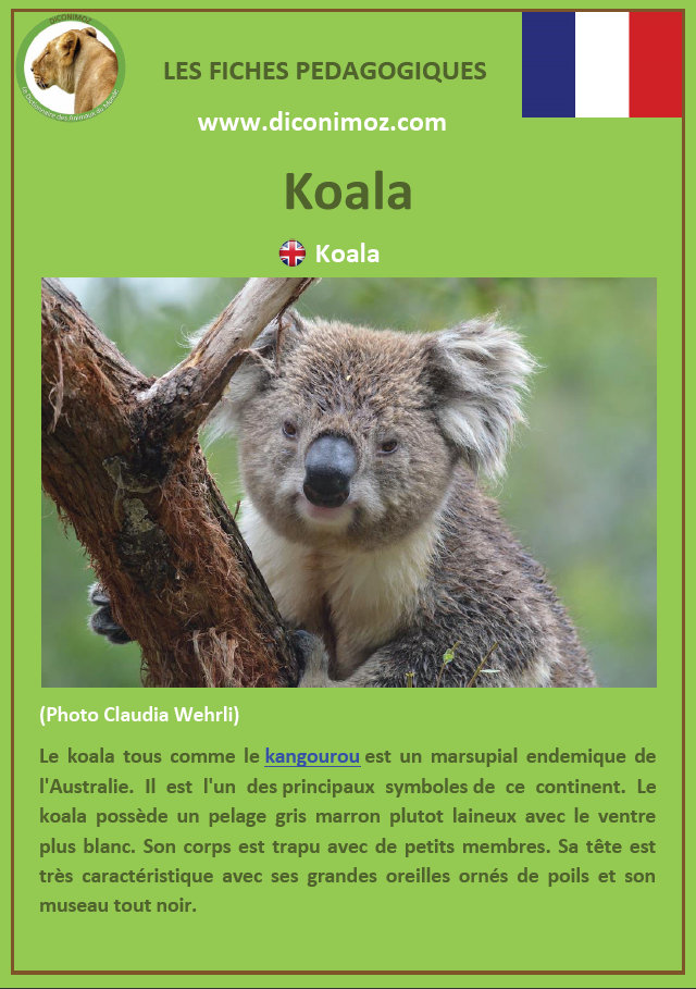 fiche animaux pedagogiques pdf australie a telecharger et a imprimer pour l'école ou la maison