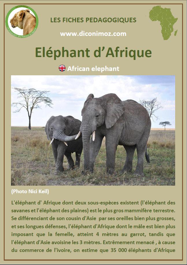 fiche animaux afrique pdf fiches animals fact