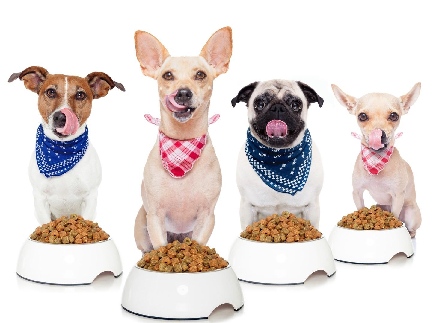 Quelle alimentation pour votre chien ?