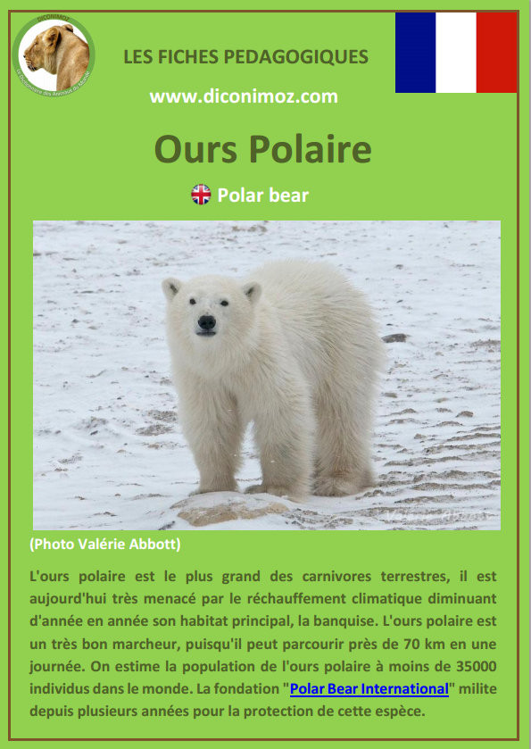 fiche animaux pdf ours polaire