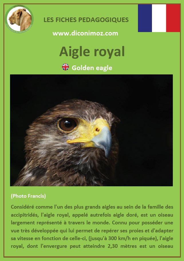 fiche animaux pedagogiques pdf aigle royal oiseau de proie rapaces a telecharger et a imprimer