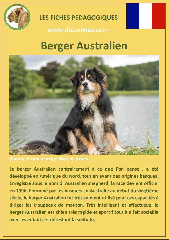 fiche animaux de compagnie chien chiens pedagogique a telecharger et a imprimer pour l'école ou la maison
