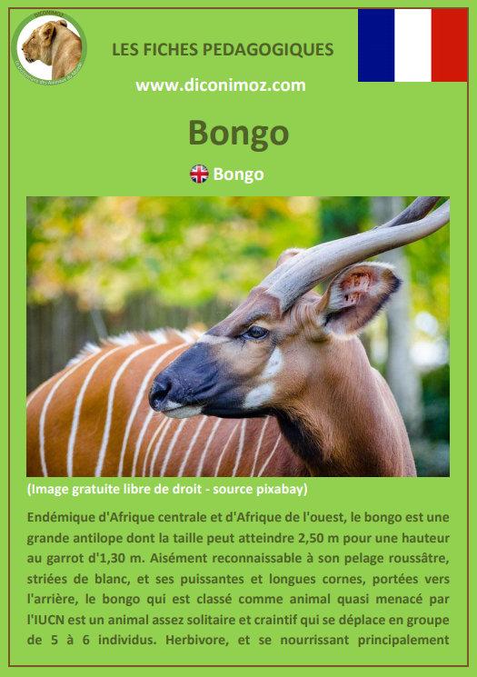 fiche animaux pedagogique pdf bongo antilope afrique a telecharger et a imprimer pour l'école ou la maison