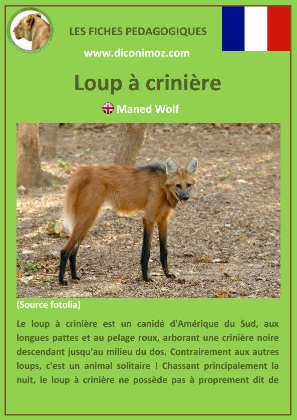 loup a criniere fiche pédagogique pdf à télécharger et a imprimer pour la maison ou pour l'école maned wolf