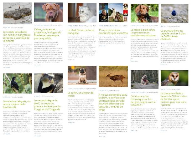 Le blog des animaux