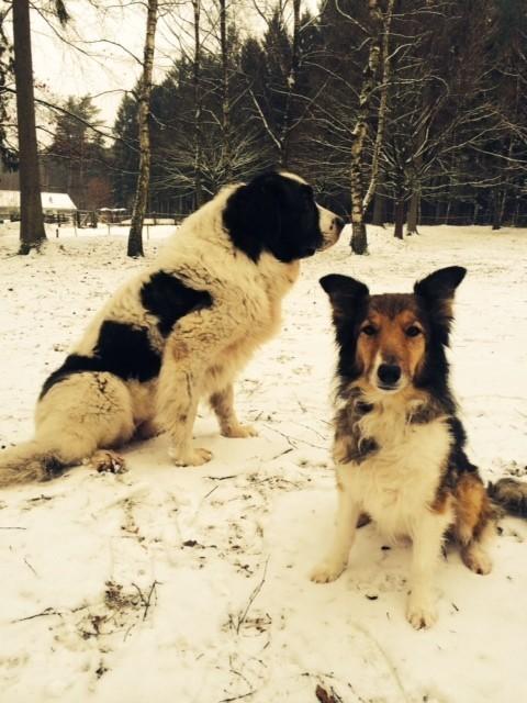 Hera und Marie wünschen Euch einen schönen Sonntag! Kommt hoch von der Couch. Der Winter lädt euch ein. Zieht Euch an warm an und genießt die herrlich frische Luft.