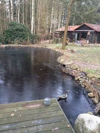 Still ruht der Gartenteich, die Fische schlafen und nur die Lockente sitzt auf dem Eis und wartet wie Lilli Laufi auf den Frühling.