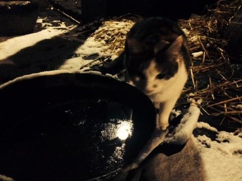 Katze Minka an der Wasserschüssel von Lilli Laufi.