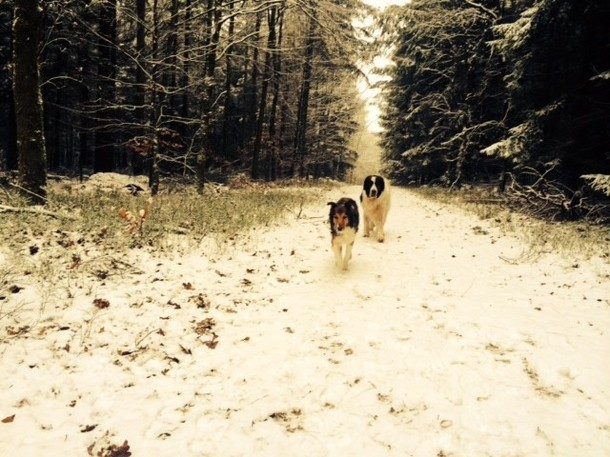 Mit Hera spazieren wir nun ohne Mütze und Pullover in den Klecker Wald und....