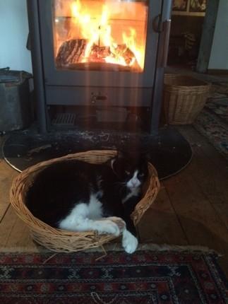 Kater Filou macht es sich vor dem Kaminofen bequem. Herrlich die Wärme! Was soll ich rausgehen?