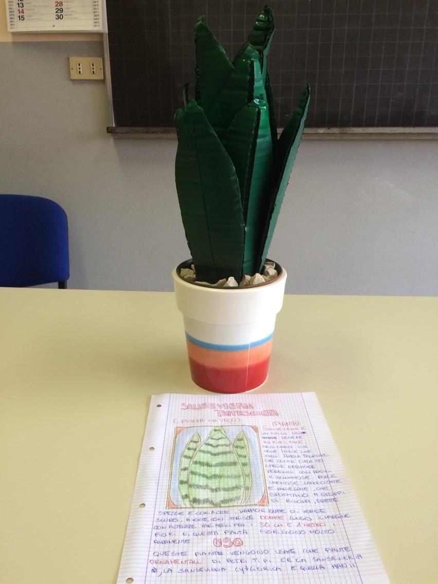 Progetto estivo regno delle piante 2015: Antonio