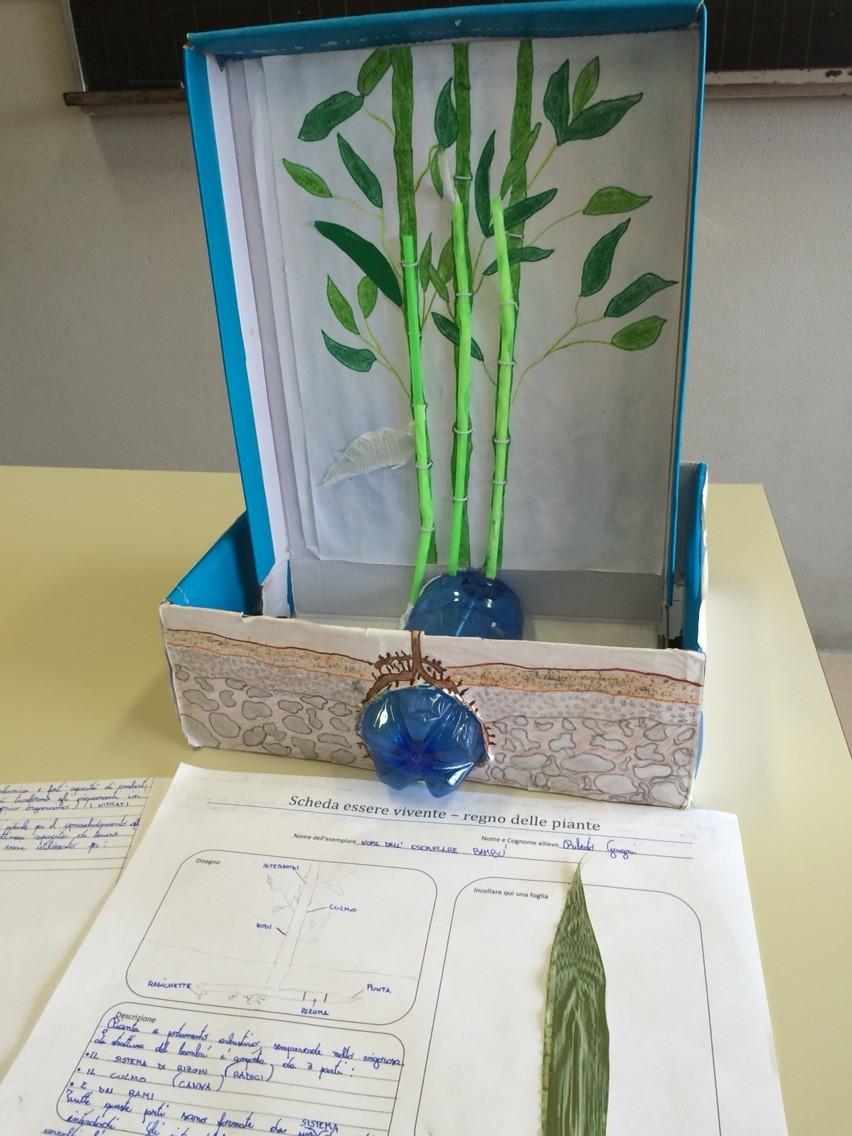 Progetto estivo regno delle piante 2015: Roberto